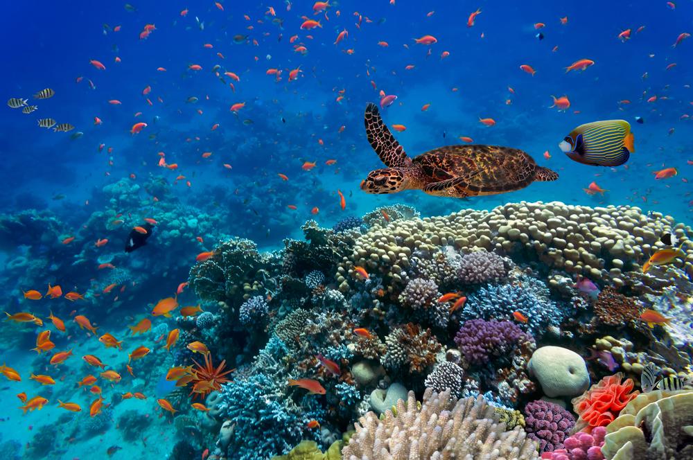Rising Oceans Temperatures Threaten Global Biodiversity