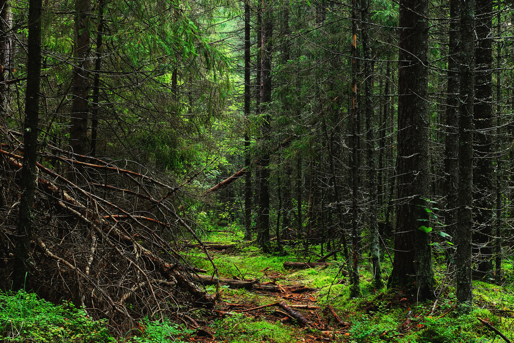 American Forests Will Accumulate Less Carbon Over the Next 25 Years