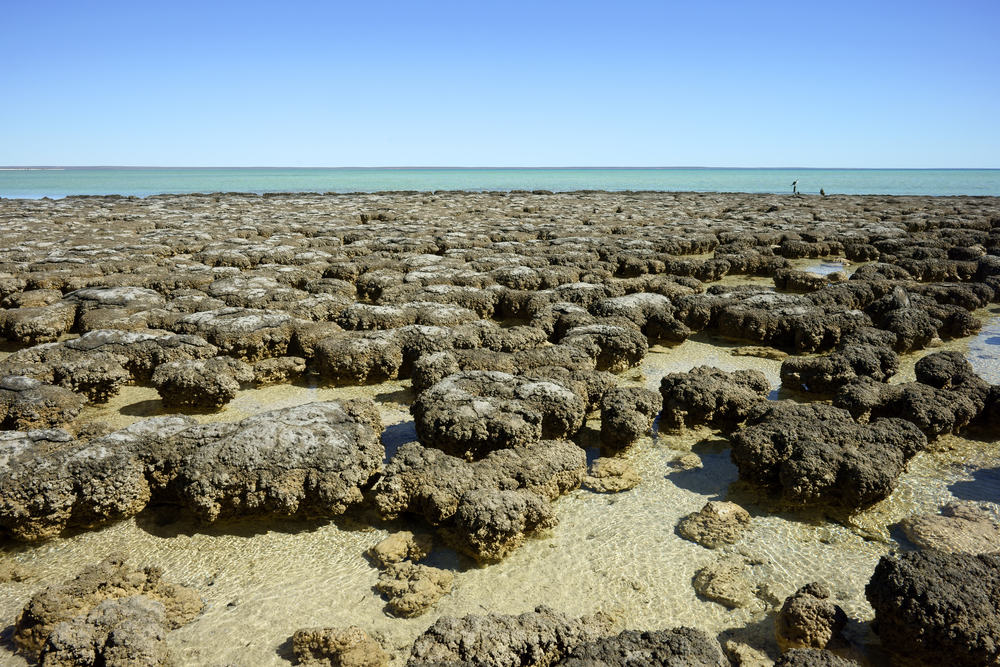 """Scientists are using """"big data"""" to study the decline of stromatolites. Big data could help with synthesis and research on many subjects, including climate change."""
