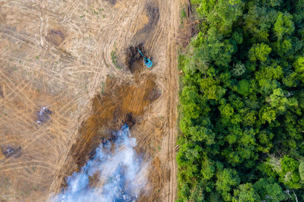 GLAD detects deforestation using satellite imagery