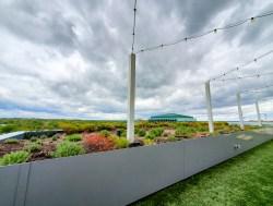 Windy rooftop garden