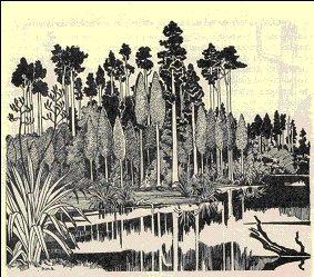 Kahikatea forest