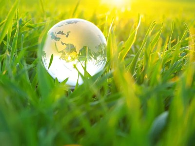 The picture above shows a glass globe in the grass.