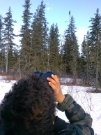 Looking at a bald eagle