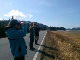 Volunteers looking at semipalmated plovers