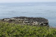 Visitors were impressed by the magnitude of the Common Murres