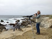 Rick and Hugo looking at black oystercatcher chicks