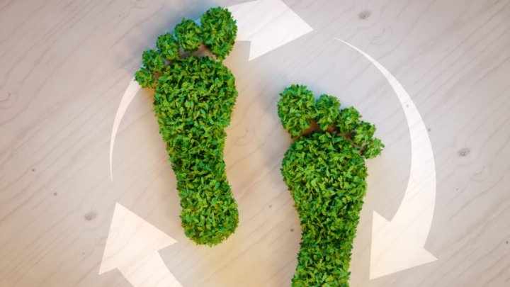 How To Reduce Your Business's  Carbon Footprint
