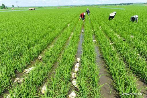 environmentally friendly farming methods