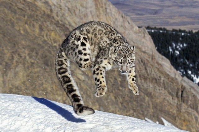 Top 5 Endangered Species in India