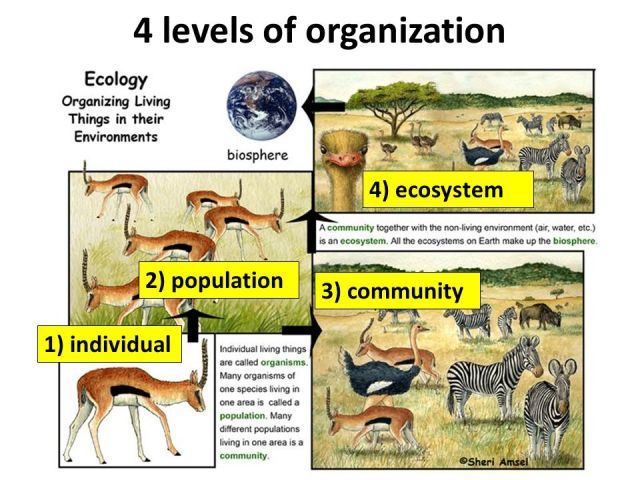 The 4 Levels of Organization in an Ecosystem