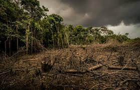 Top 14 Effects of Deforestation on the Environment