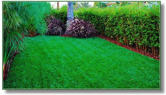 Good Questions To Ask Before Installing Turfgrass Isu2026.How Much Grass Do We  Really Need?
