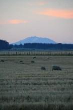 Ruapehu at Sunset