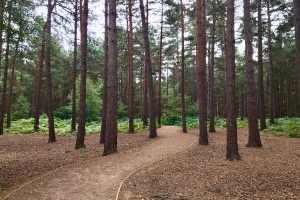 path winding through trees