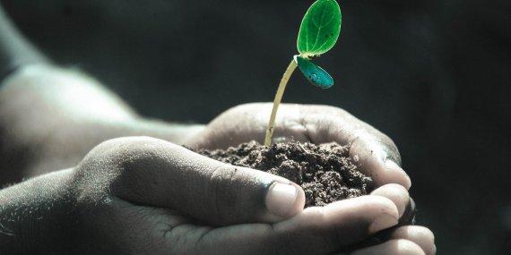 growing plant in hands