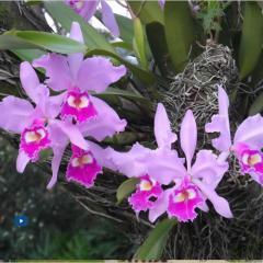 Orquídeas cultivadas en la Universidad EAFIT