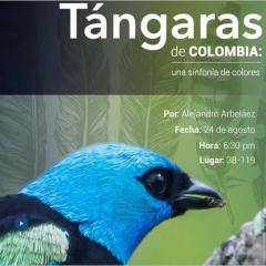 Tángaras de Colombia: una sinfonía de colores