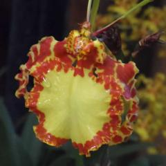 Orquídeas, flores y artesanías 2017