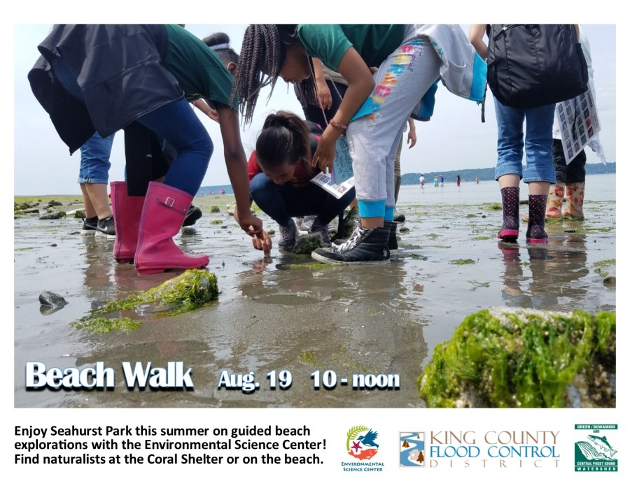 2017 Summer Beach Walks2