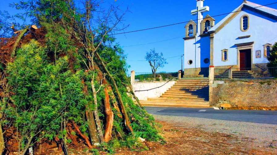 Madeiro2014_www.enxames.com