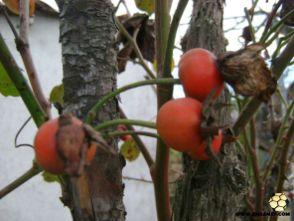 No meu quintal dos Enxames - Janeiro -3