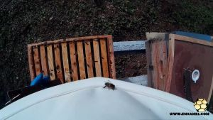 varroa-Enxames-20151010-1
