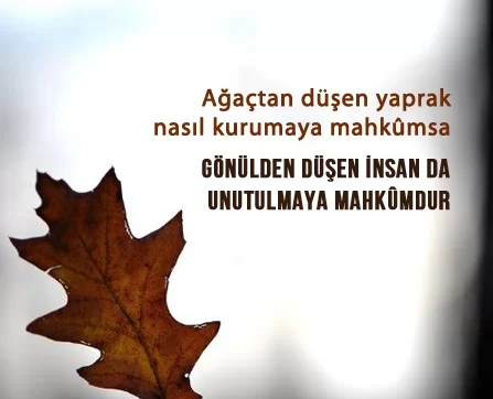 ağaçtan düşen yaprak - Sonbahar İle İlgili Sözler - Resimli Sonbahar Sözleri, resimli-sozler, guzel-sozler
