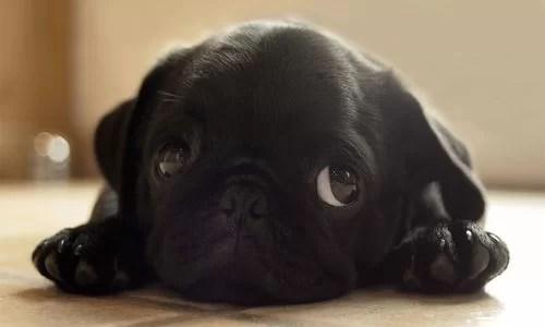 irin yavru köpek - Şirin Kapak Fotoğrafları - Sevimli Ve Tatlı Kapak Resimleri, komik-sozler, guzel-sozler