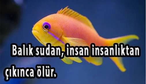 Balık sudaninsan insanlıktan çıkınca ölür - Şirin Kapak Fotoğrafları - Sevimli Ve Tatlı Kapak Resimleri, komik-sozler, guzel-sozler