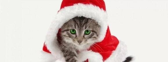 Tatlı noel kedi - Şirin Kapak Fotoğrafları - Sevimli Ve Tatlı Kapak Resimleri, komik-sozler, guzel-sozler