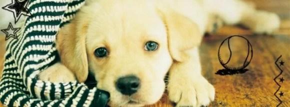 Yavru köpek - Şirin Kapak Fotoğrafları - Sevimli Ve Tatlı Kapak Resimleri, komik-sozler, guzel-sozler