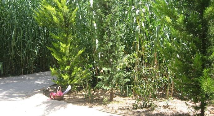 Ημερίδα Δήμου Αμαρουσίου για την παρουσίαση έργου για τη δημιουργία χώρων πρασίνου