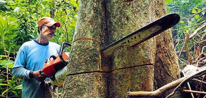 H παγκόσμια… αναπνοή κόβεται στον Αμαζόνιο