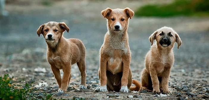 Μέριμνα για τα αδέσποτα ζώα από τον Δήμο Κηφισιάς