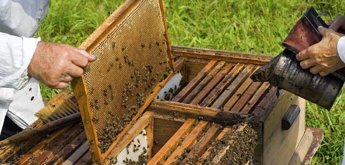 Συνελήφθη μελισσοκόμος που κάπνιζε μελίσσια με δείκτη επικινδυνότητας 4