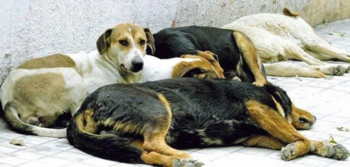 Συζήτηση για τις ανάγκες των ζώων στο Εντευκτήριο Εκάλης