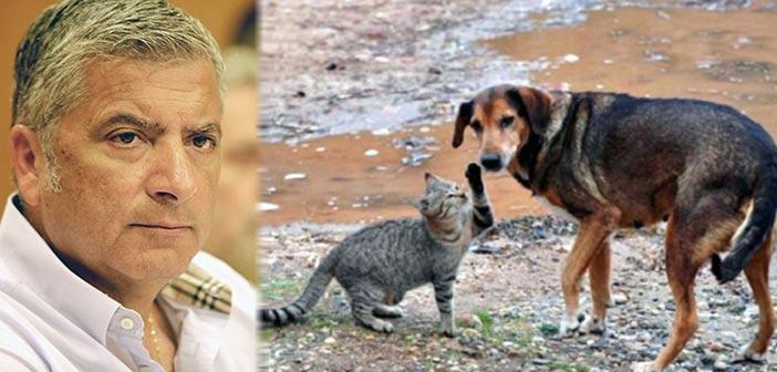 Προτεραιότητα για την ΚΕΔΕ η προστασία αδέσποτων ζώων