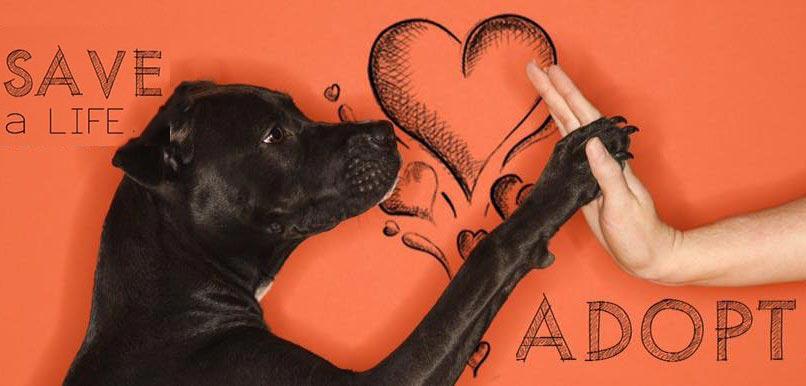 Puppy Day στο κέντρο της Κηφισιάς το Σάββατο 13 Ιανουαρίου