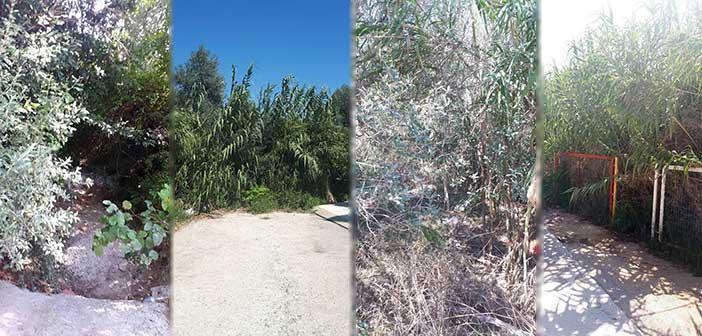 Δήμος Αμαρουσίου προς Περιφέρεια Αττικής: Καθαρίστε άμεσα το ρέμα Κυρίλλου στο Ψαλίδι