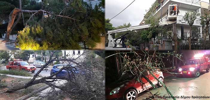 Στο «πόδι» η Πολιτική Προστασία Δήμου Βριλησσίων – Συνεχείς πτώσεις δένδρων