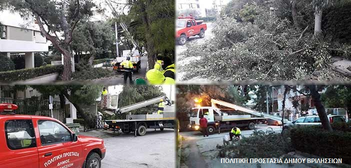 Συνεχίζονται οι πτώσεις δένδρων στα Βριλήσσια – Επί ποδός οι υπηρεσίες Πολιτικής Προστασίας & Πρασίνου