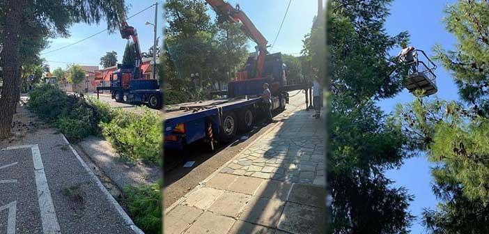 Ξεκίνησε το κλάδεμα ψηλών δέντρων με τη χρήση ειδικού οχήματος