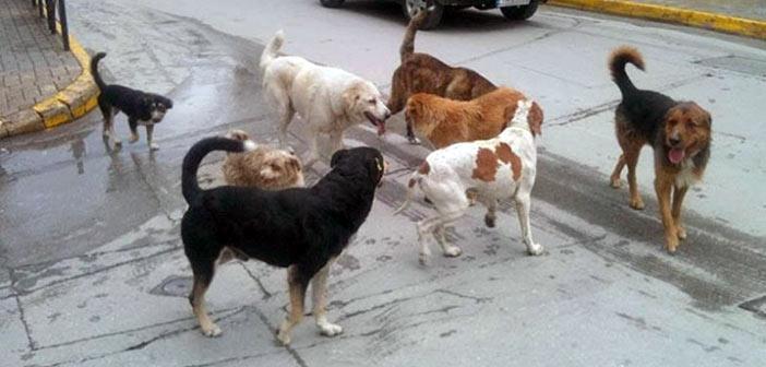 Επίθεση «αγέλης» σκύλων στον Διόνυσο: Δύο σοβαρά τραυματίες