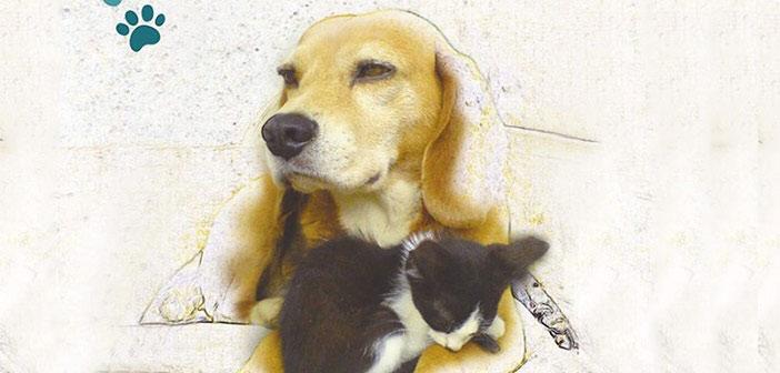 Γιορτή υιοθεσίας αδέσποτων ζώων στον Δήμο Παπάγου – Χολαργού