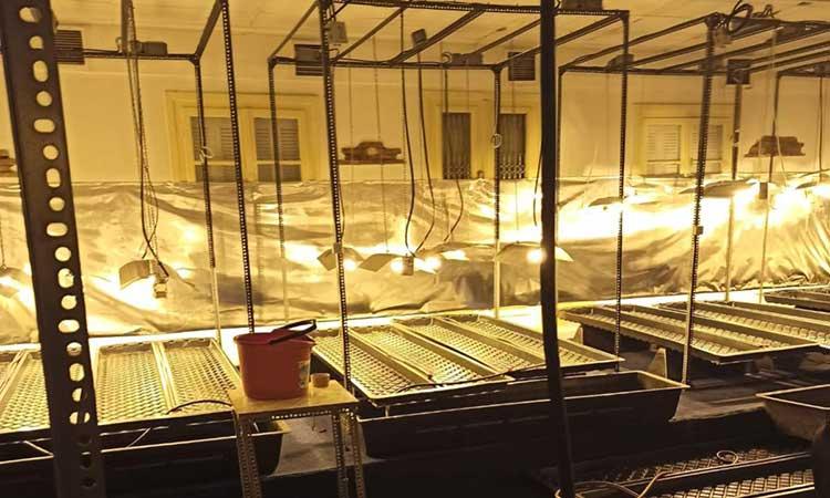 Εξαρθρώθηκε σπείρα που καλλιεργούσε υδροπονική κάνναβη