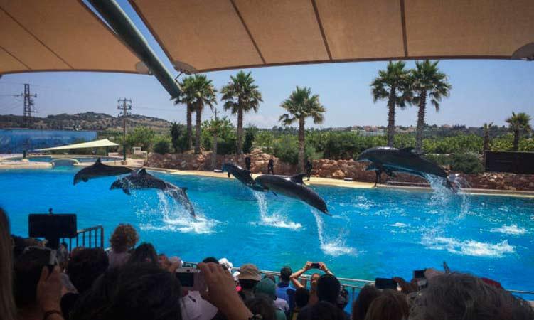 Συζήτηση για το Αττικό Ζωολογικό Πάρκο θέλει να φέρει στο Πε.Συ. Αττικής η Οικολογική Συμμαχία