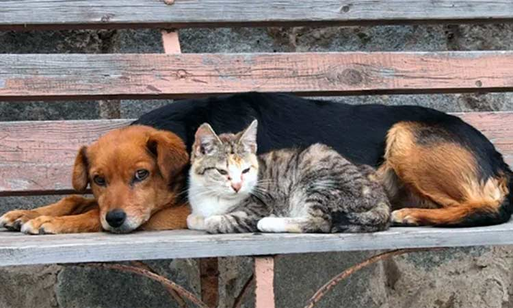 Δήμος Βριλησσίων: Κάθε ημέρα είναι ημέρα προσφοράς και βοήθειας για τα αδέσποτα ζώα