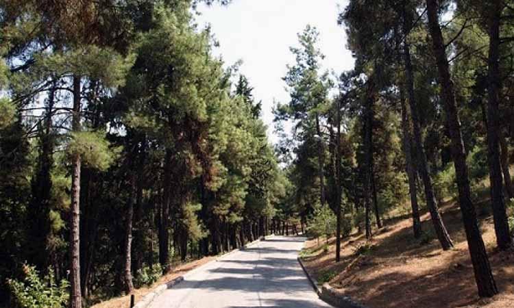 «Λουκέτο» στο πάρκο «Στρ. Αλ. Παπάγου» και στο άλσος «Α. Παπανδρέου» στον Δήμο Παπάγου – Χολαργού