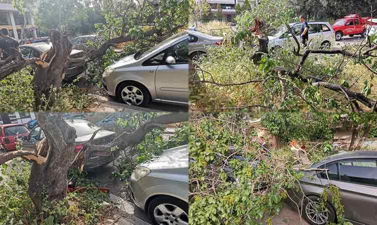 Πτώση δένδρου στα Βριλήσσια – Ζημιές σε σταθμευμένα αυτοκίνητα